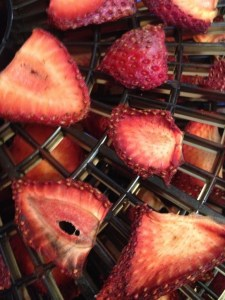 mmmm! Dried Strawberries for the trail
