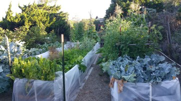 The Vegetable Garden on June 25, 2017