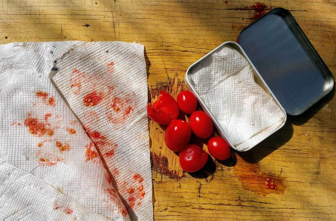 SHows how to place tomato seeds on a paper towel for storage