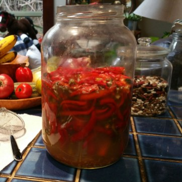 Week 4, and 4th addition of fresh peppers; are all fermenting nicely