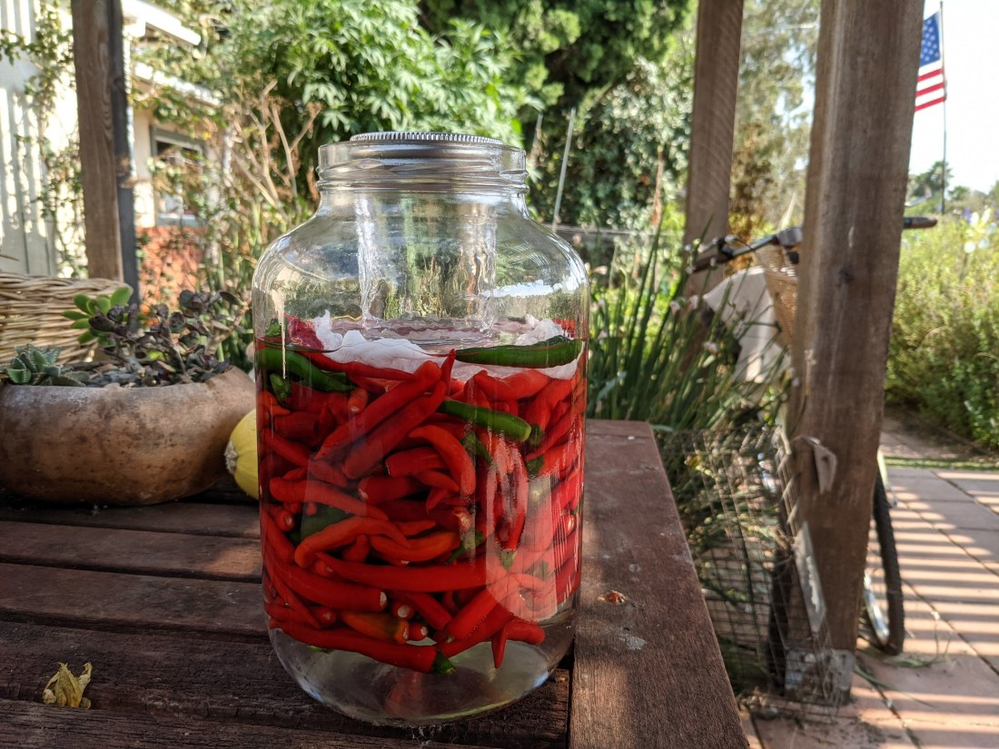 Brining hot peppers