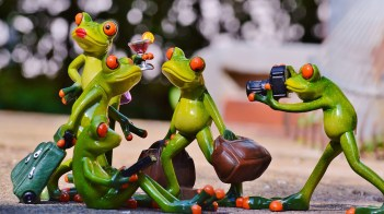 frogs-897981_1920