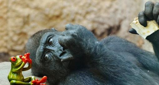 monkey-1359466_1920