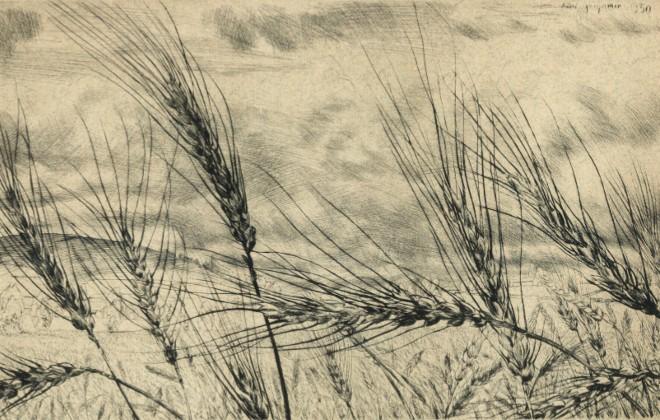 Exposition André Jacquemin - Blés primitifs en Velay