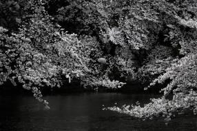 Mikio Watanabe. Sans titre. 2014. Photographie.
