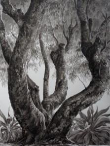 François Houtin - Rio - étude n°1 - Parque Lage
