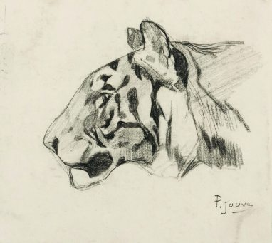Paul Jouve - Tête de tigre de profil