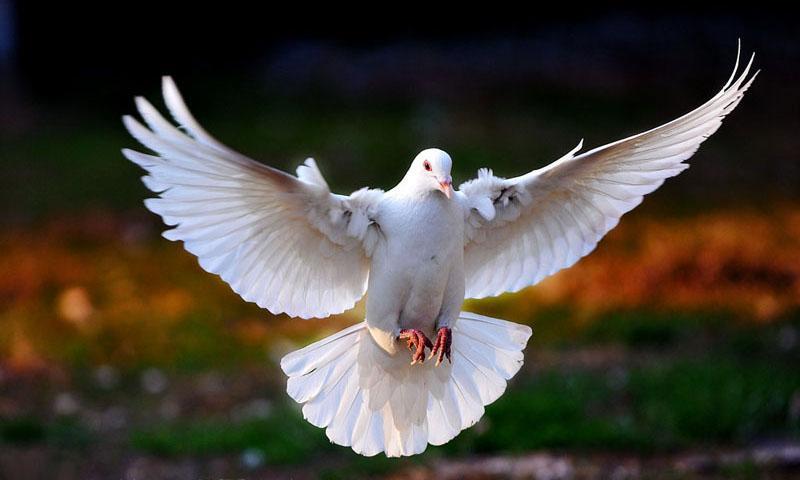 Sahabatnesia - Mukjizat Sedekah
