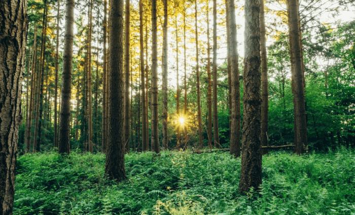 Hutan Lindung Adalah