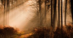 17 Fungsi Hutan Lindung Beserta Pengertian dan Contohnya