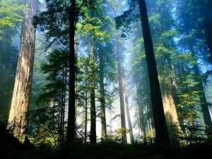 7 Ciri Ciri Hutan Hujan Tropis Beserta Pengertian dan Manfaatnya