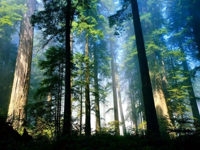 Hutan Hujan Tropis Indonesia