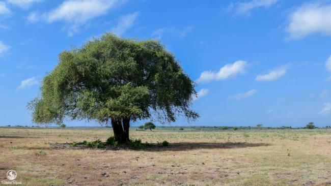 Savana Bekol Taman Nasional Baluran
