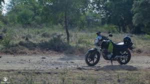 Thole di Taman Nasional Baluran