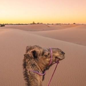 14 days Morocco tour