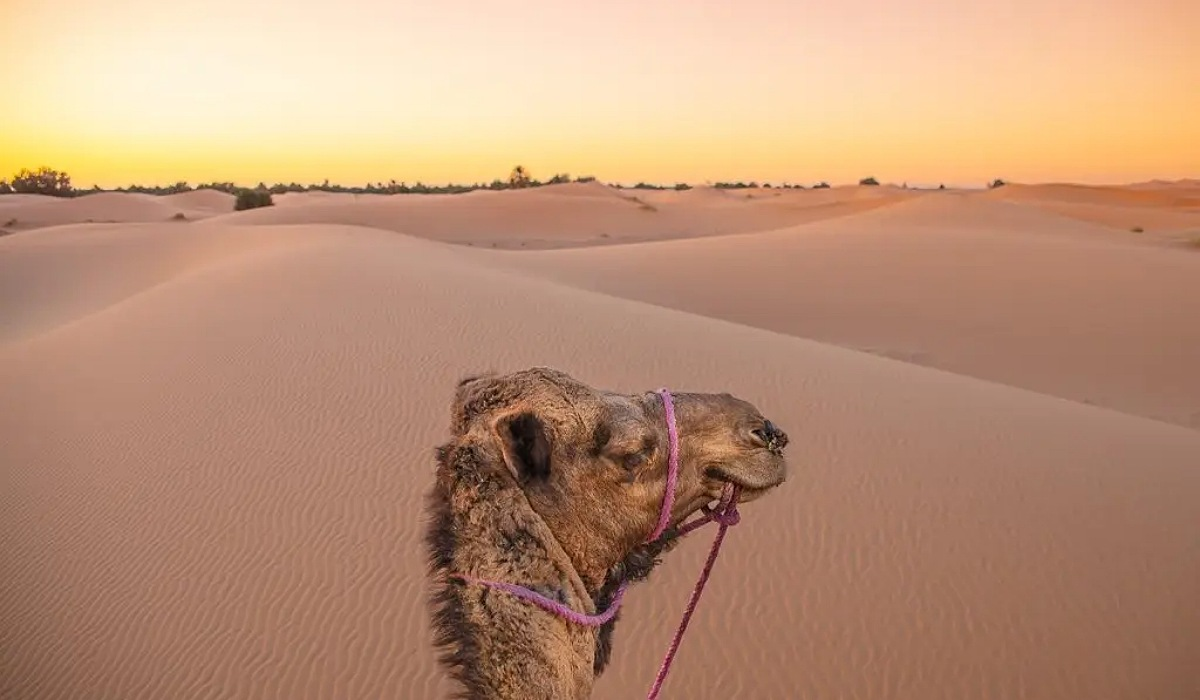 3 Nights in Merzouga desert