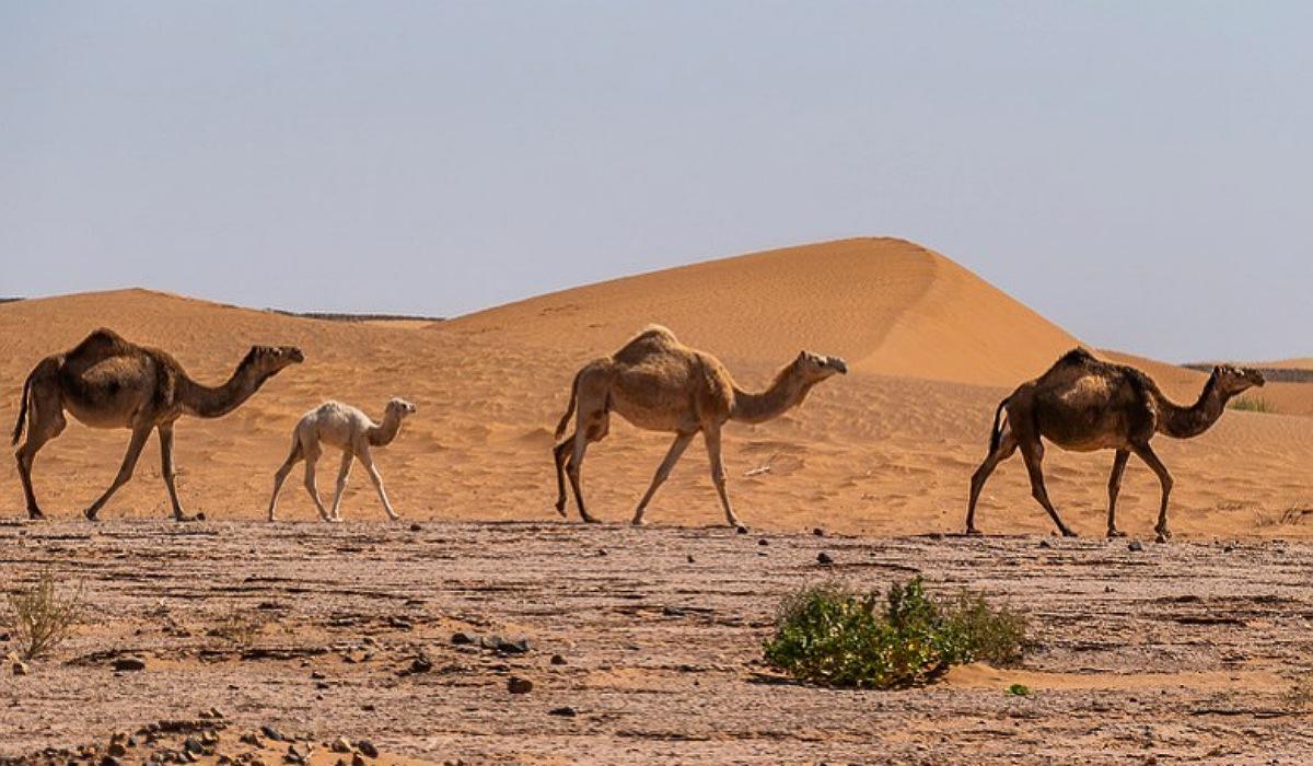 Zagora sahara desert