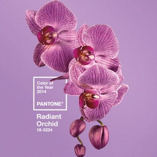 pantone-main_2755835a