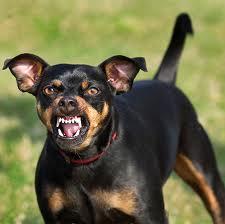 growling-dog