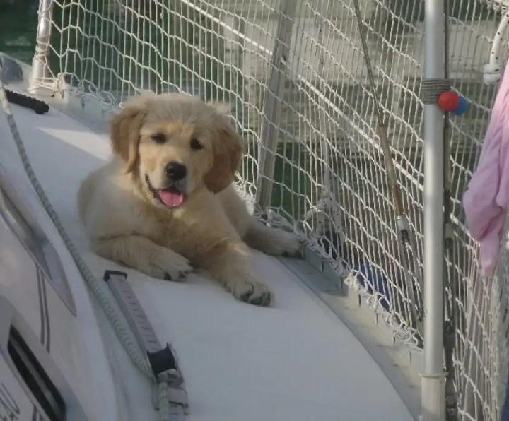 barca a vela con il tuo cane