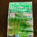 スティックブロッコリー:播種