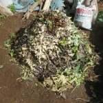 堆肥づくり:グリーン堆肥 の製造法・使用法