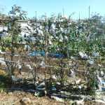 菜園日記:21号台風の被害