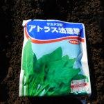ホウレン草(4):播種