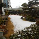 菜園日記:2月の積雪