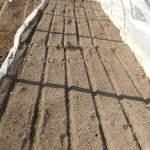 長ネギ:苗床に播種