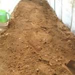 大玉トマト:土づくり(深溝に堆肥投入)