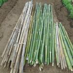 農業資材:エンドウの竹支柱・杭づくり