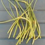 ニンニク:とう立ちした芽を摘む
