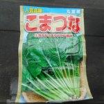 小松菜(4):播種