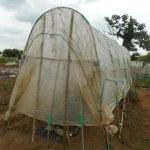 大玉トマト:雨除けハウスづくり