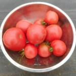 大玉トマト:1回目の追肥
