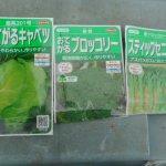 秋播きキャベツ・ブロッコリー:苗床に播種