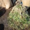 グリーン堆肥づくり:No.1G堆肥の仕込み(3)