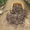 九重栗カボチャ:畝づくり