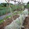 蔓ありインゲン(2):合掌式支柱を立てネットを張る