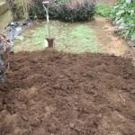 イチゴ:イチゴ畑の雑草除去(2)