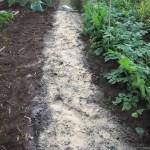 そら豆:土づくり(2)