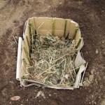 農業施設:サツマイモ苗の育苗(1)