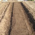 枝豆:仮畝をつくり、鍬で耕す