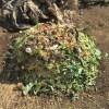 グリーン堆肥づくり:No.4G堆肥の仕込み(2)