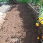 夏播きブロッコリー:土づくり