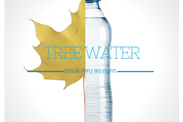 Turning maple sap into water equals profits