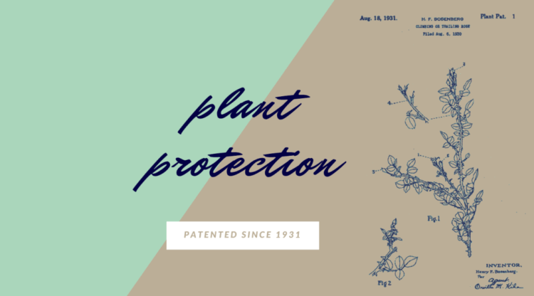 plant panent blog