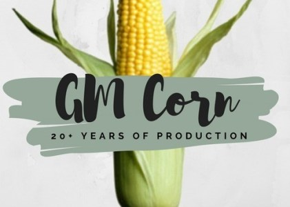 What are the Environmental and Human Health Impacts of GM Corn?