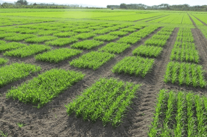 New Crop Varieties: The Journey from Lab to Field – Seeding